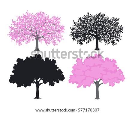 sakura  cherry blossom tree in