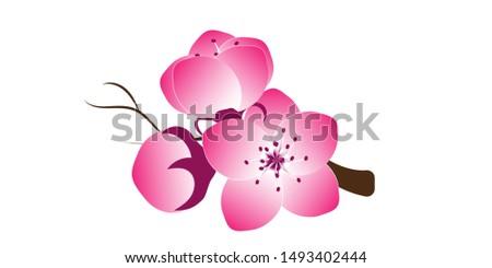 Sakura flower Sakura vector flower. Vector illustration.