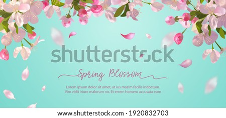 Sakura flowers and flying petals on spring background Photo stock ©