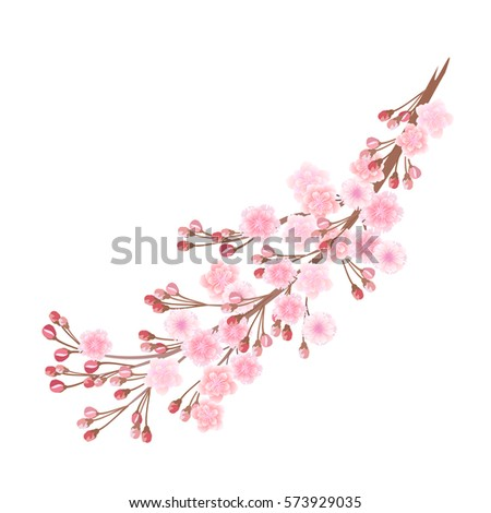 sakura flowers hand drawn