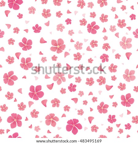 sakura flowers isolated on