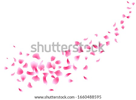 Sakura flying petals. Flowers design. Flowers petals. Isolated on white background. Petals Roses Flowers. Vector illustration