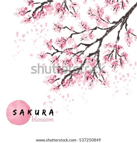 sakura japan cherry branch with