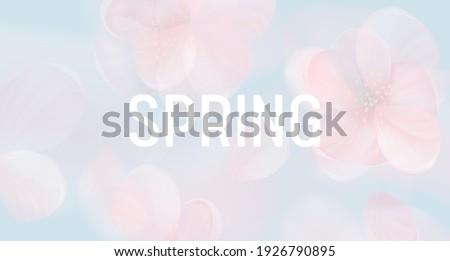 sakura petal pink background