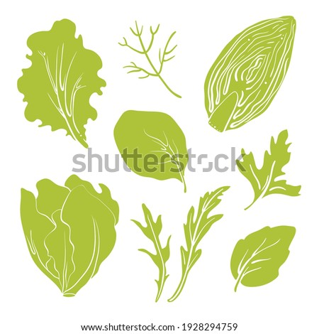 Salad leaves and herbs: lettuce, chicory, swiss chard, arugula, dill, parsley. Colorful line sketch collection of vegetables and herbs isolated on white background. Doodle hand drawn vegetable icons.  Foto stock ©