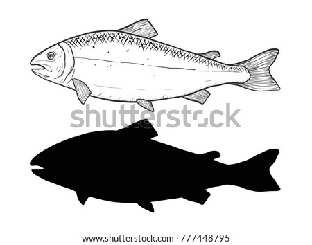 Line Art Of Fish : Free fish line illustration vector download art stock