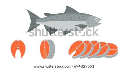 salmon fish and sliced of salmon fillet steak illustration, flat design vector