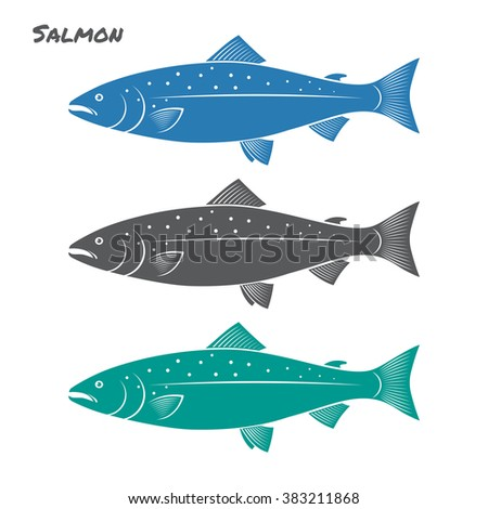 salmon fish vector illustration