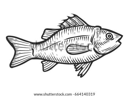 salmon tuna fish cartoon animal