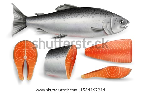 Salmon whole red fish, raw steaks and fillet, vector illustration isolated on white background. Realistic seafood product, sushi ingredient, healthy nutrition.