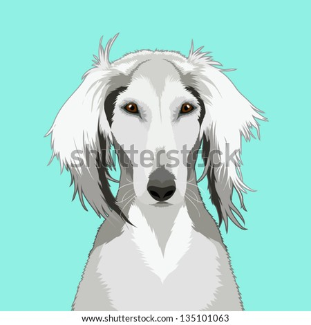 Saluki, The buddy dog