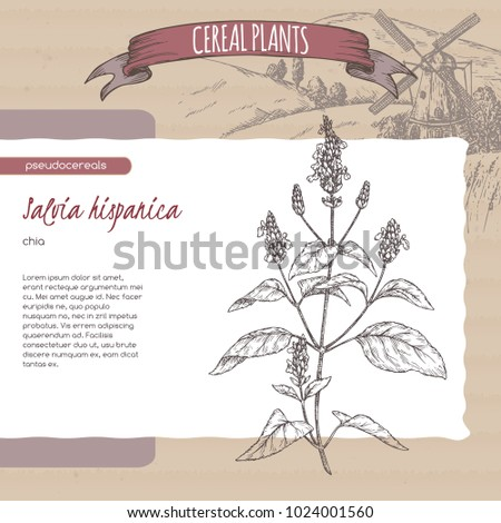 Salvia hispanica aka chia sketch with field landscape. Cereal plants collection. Great for bakery, agriculture, farming design.
