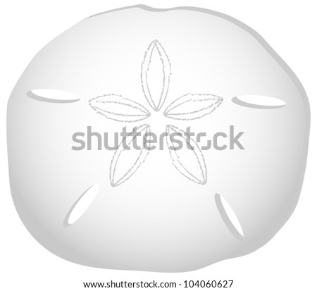 Sand Dollar Isolated on White