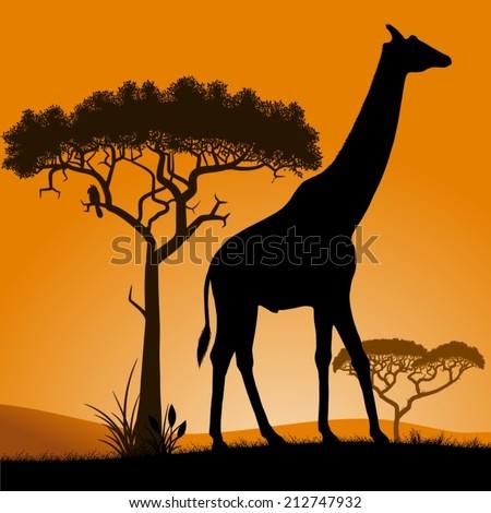 savannah   giraffe dawn in the