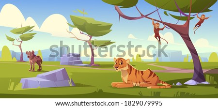 Savannah landscape with tiger, monkeys and jackal. Vector cartoon scenery of african savanna, summer natural park or tropical safari with wild animals, green trees and stones ストックフォト ©