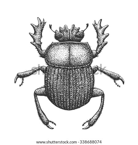 Scarab - Classic Drawn Ink Illustration Isolated on White Background