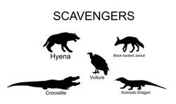 Scavengers animals vector silhouette illustration isolated on white background. Wildlife predators. Hyena, jackal, crocodile, vulture and komodo dragon lizard.