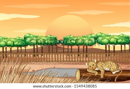scene with cheetah in the zoo