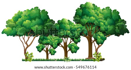 scene with many trees