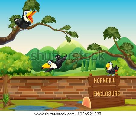 Scene with three hornbill birds in zoo illustration