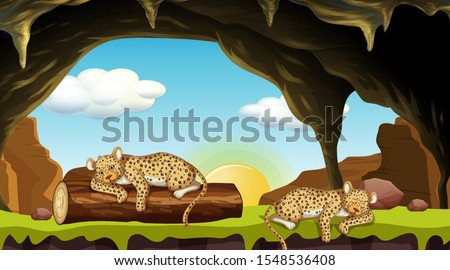 scene with two cheetahs