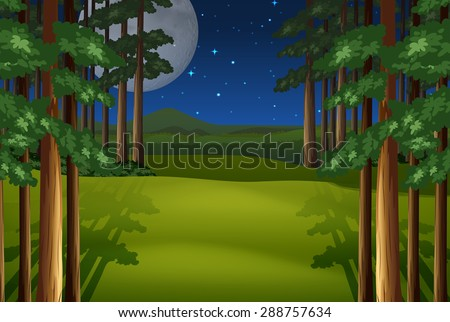 scenery of a forest on a full