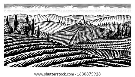 scenic view of vineyards