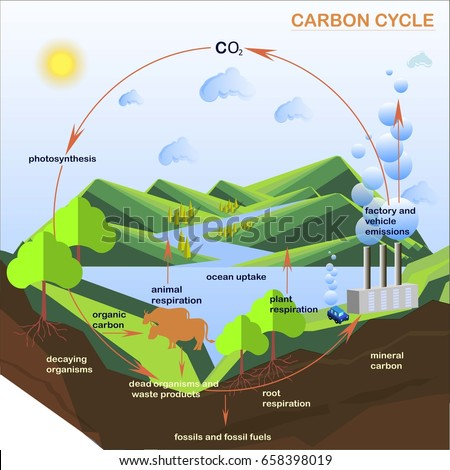 Scheme of the Carbon cycle, flats design stock vector illustration