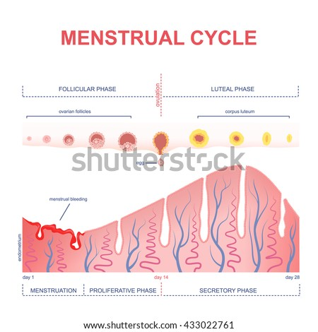 how to get menstrual cycle