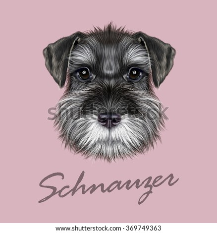 schnauzer dog portrait vector