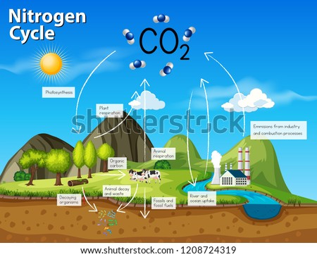 Science nitrogen cycle CO2 illustration