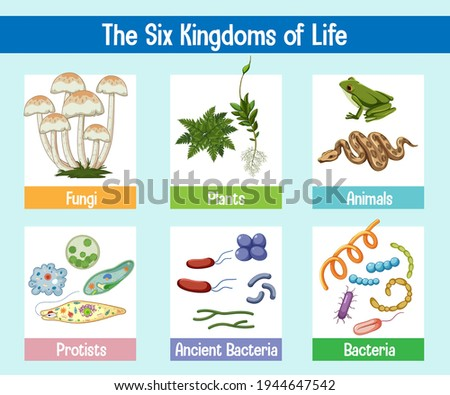 Science poster of six kingdoms of life illustration Foto stock ©