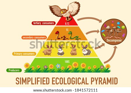 Science simplified ecological pyramid illustration Foto stock ©