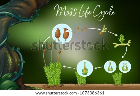 science vector of moss life