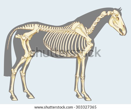 Horse Skeleton Ez Canvas