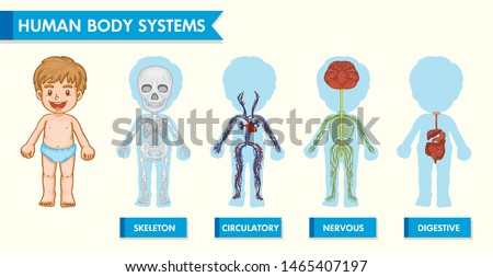 Scientific medical illustration of human body systems in children illustration