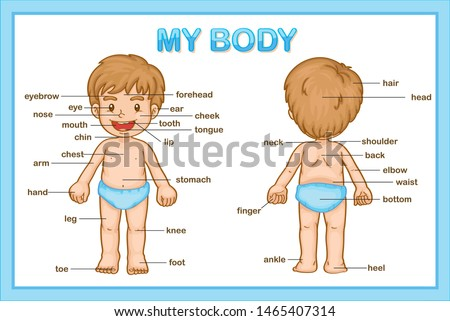 Scientific medical illustration of parts of the body illustration