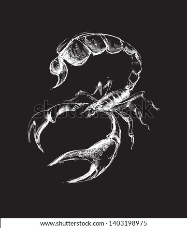 Scorpio with a big sting and claws. White on a black background. T-shirt or outerwear design. - Vector graphics