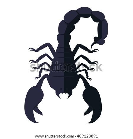 scorpion animal isolated on