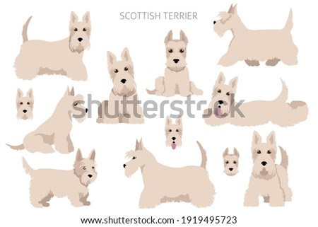 Scottish terrier dogs in different poses Adult and puppy scottie set.  Vector illustration Foto stock ©