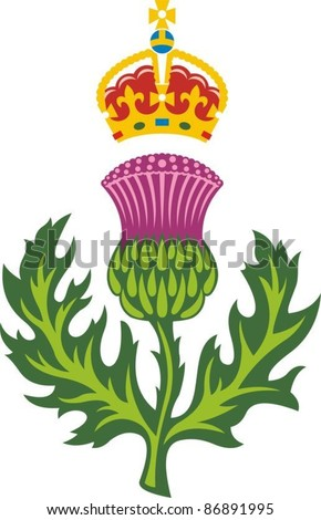 Scottish thistle .Badge of Scotland vector - stock vector