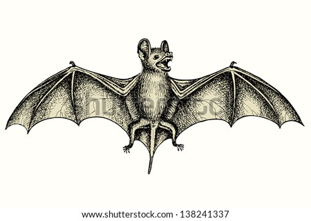 Screaming flying bat with extended wings, hand drawn vector illustration