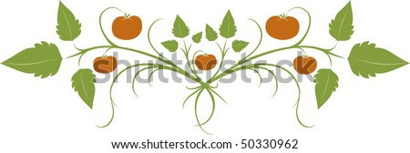 scrolling vector banner featuring ripe tomatoes and foliage