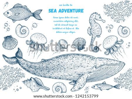 Sea animals hand drawn collection. Sketch illustration. Blue whale, sea horse, jellyfish, fish, seaweed, seashells illustration. Vintage design template. Undersea world.