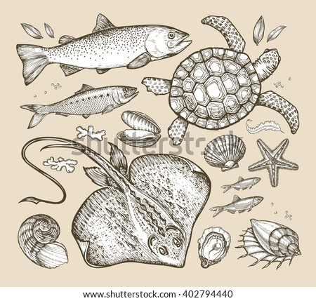 sea animals hand drawn