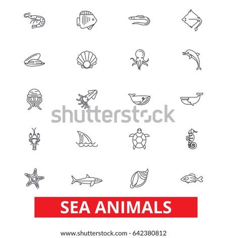 sea animals  ocean creatures