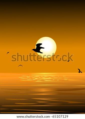 sea bird and the sunset