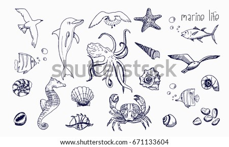 sea creatures isolated on white