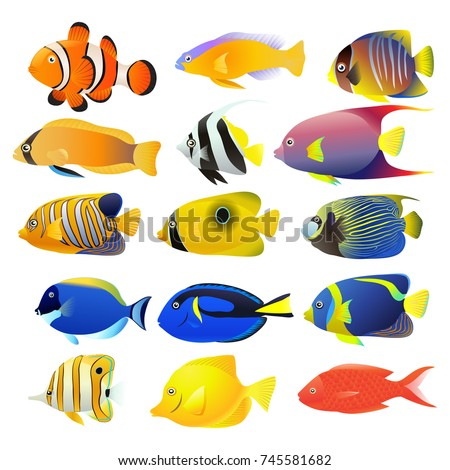 sea fish collection isolated on