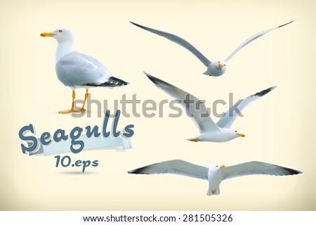 Sea gulls vector icon set
